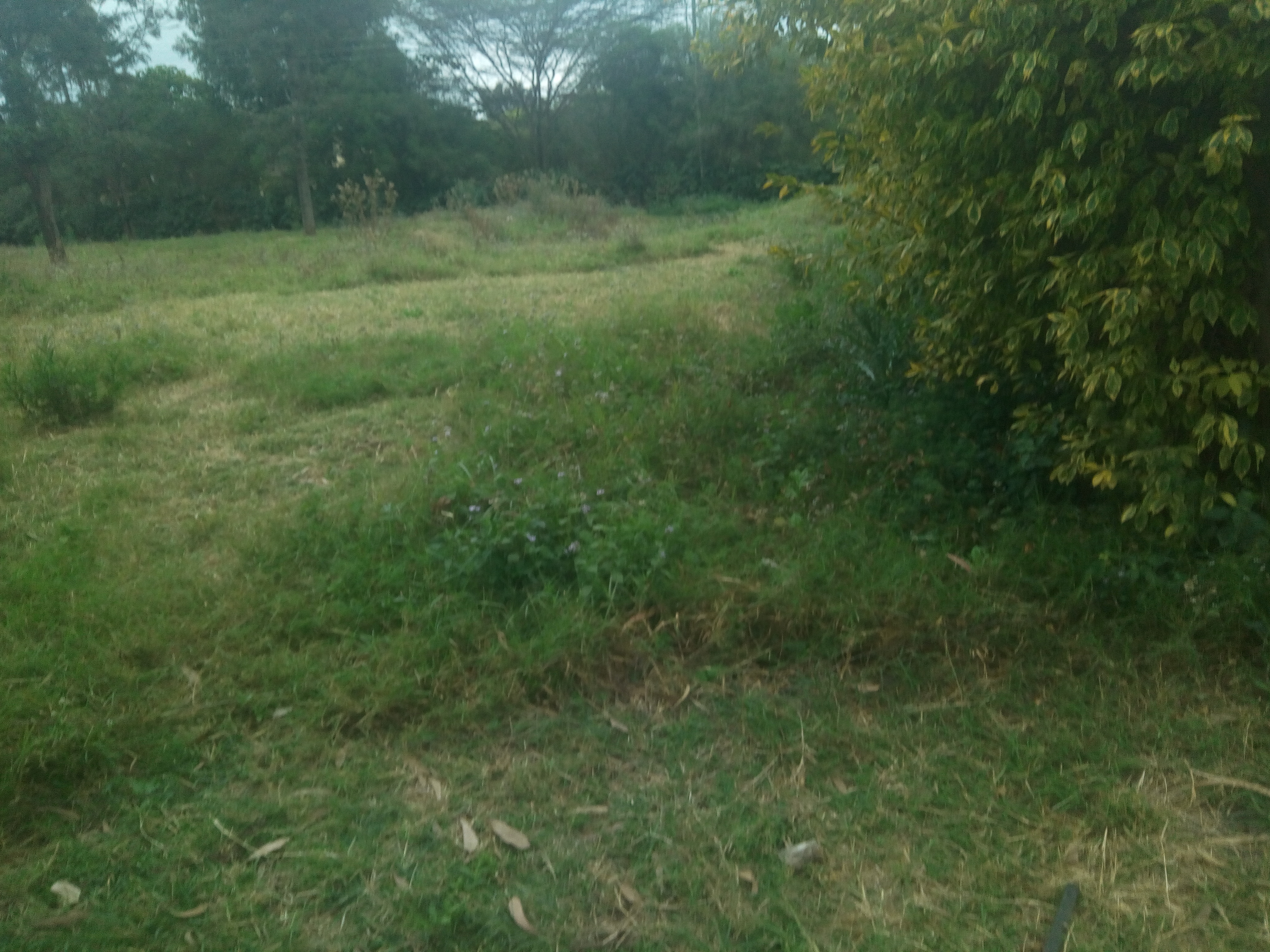 1 acre for sale